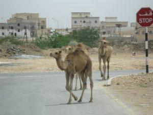 Eine Reise in den Oman – Engl.